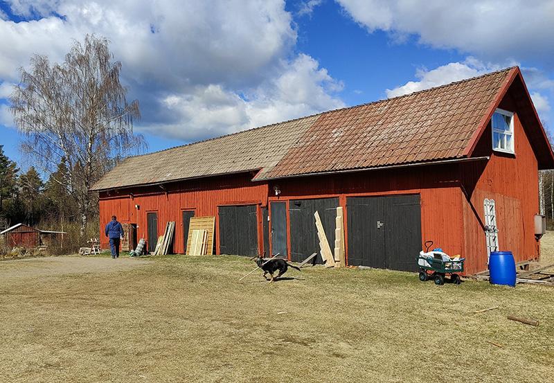 En faluröd lada. Framför den, på gårdsplanen, en glad hund som hittat en bra pinne. Man skymtar också Rickard, på väg till hönshuset.