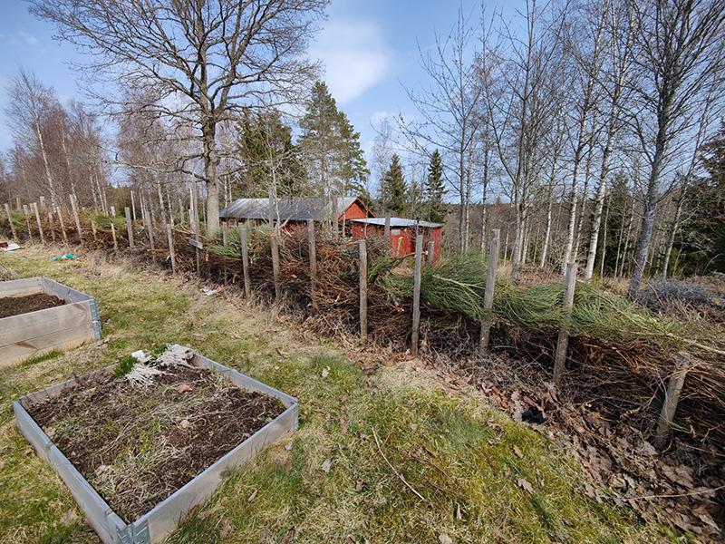 En bild där man ser en lång häck, gjord av stolpar med ris nedstoppat mellan dem. Bakom häcken skymtar en röd stuga. Framför häcken syns några pallkragar.