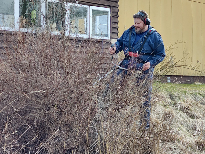 Bilden visar Rickard i full färd med att kapa ner en risig buske.