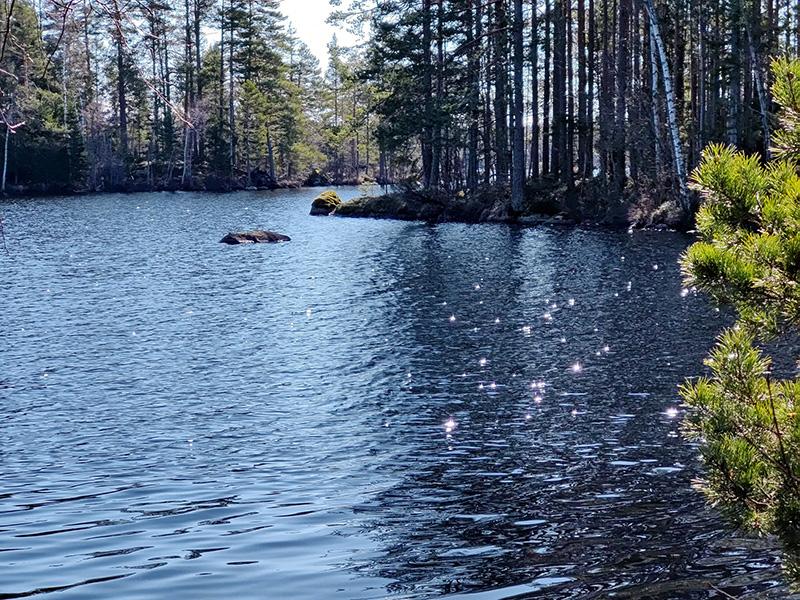 Utsikt över en vik i sjön. Solen glittrar i vattnet.