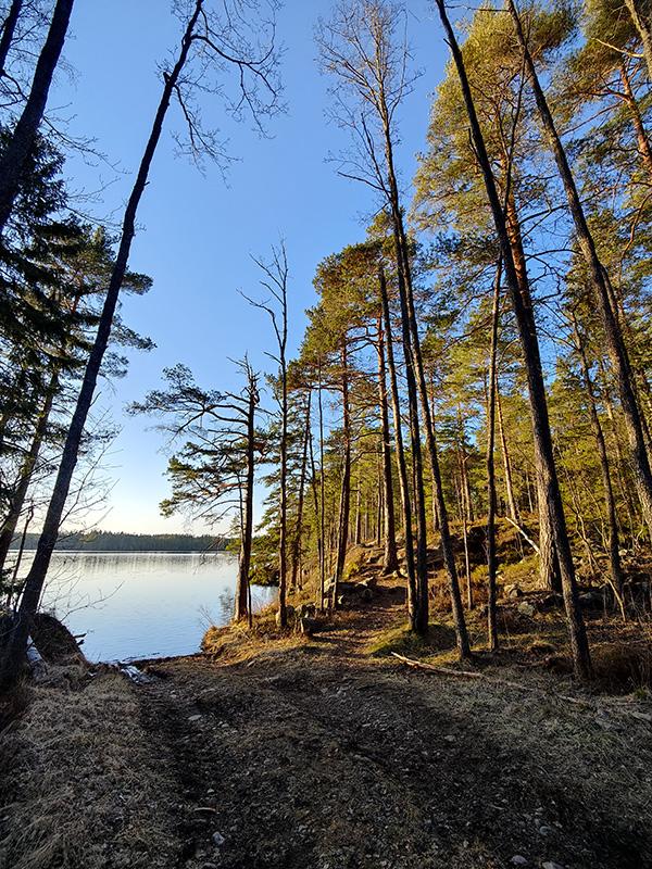 En liten skogsväg leder ner till sjön. Vattnet är blått, himlen är blå. Solen lyser på tallskogen och gör den alldeles gyllene.