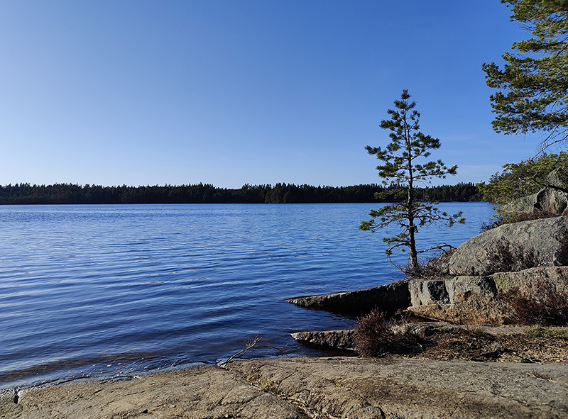 Utsikt över sjöns blå vatten. I förgrunden klipphällar och små tallar.