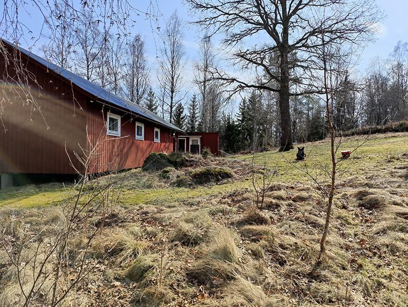 Bilden visar en liten röd stuga och intill den en ek. På gräsmattan framför eken ligger en svart hund.
